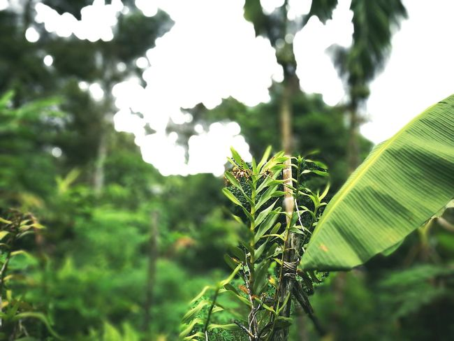 Nature Beauty In Nature Plant Outdoors