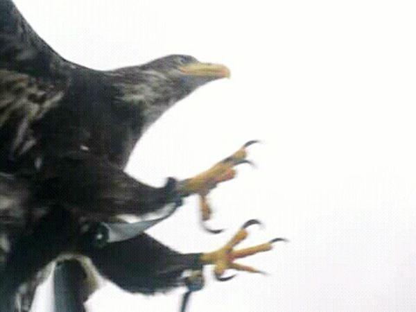 Aguila Volando Flying Fliying Birds Fliying Wing EyeEm Nature Lover EyeEm Best Shots Siluetas Pajaro Fine Art Photography Fotografo Destacado