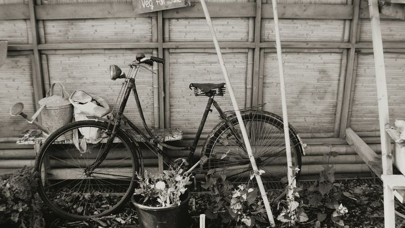 Bicycle Mode Of Transport No People Bygone Times Byegone Days Parked Taking Photos