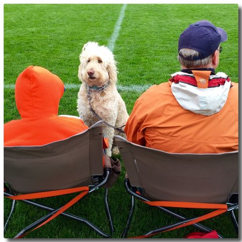 Two boys and a Dog Boy Man Orange Dog Goldendoodle Cream Sit Chair Face Away From Camera