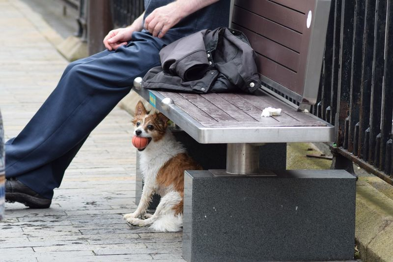Low section of man sitting on bench by dog