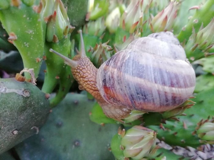 Close-up of snail on plant