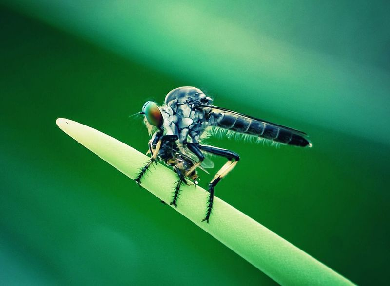 tasik perdana Insect Animal Themes Animals In The Wild Green Color One Animal No People Animal Wildlife Close-up