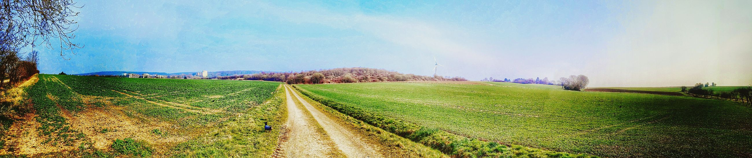 agriculture, field, landscape, rural scene, sky, farm, grass, tranquil scene, growth, tranquility, nature, crop, the way forward, beauty in nature, panoramic, green color, scenics, cultivated land, diminishing perspective, plant