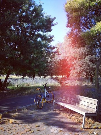 Tree Bicycle Land Vehicle Bicycle Rack Sunlight Sky Summer Road Tripping