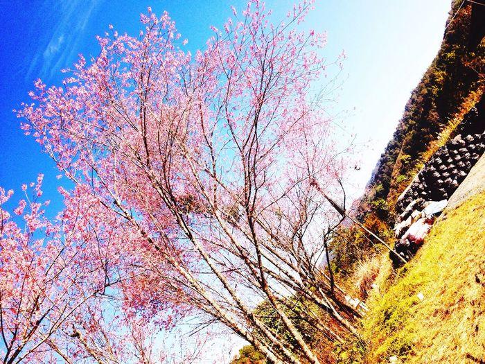 Everyday Joy Taking Photos Enjoying Life Relaxing Flowers sunchine Hi!