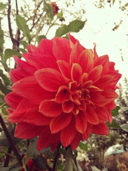Flower Red Single Flower Vibrant Color