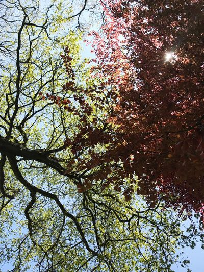 Tree Plant Low Angle View No People Backgrounds Full Frame Nature Growth Day Branch Tranquility Beauty In Nature Pattern Outdoors Sky Tree Canopy  Directly Below Sunlight