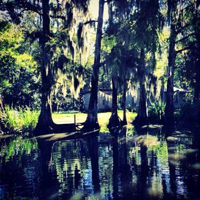Reflection Nature Creepy Trees Haunted Grass Rural Scary Weeds Overgrown Louisiana Bayou Swamp Sketchy WhiteCastle Tallgrass Gulfcoast Deepsouth Boatlaunch Oldsouth Onlylouisiana Louisianatravel Oldlouisiana Rebels_t