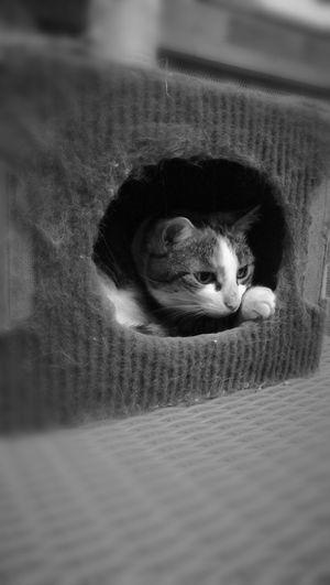 Mouflette Cats