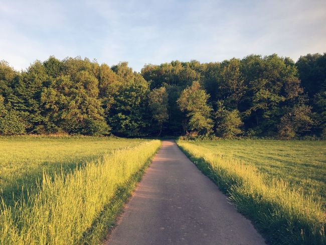 Nach der Schicht, end of the road? Tree Landscape Field Nature Grass No People Sky Tranquil Scene Scenics Tranquility Beauty In Nature The Way Forward Day Growth Road Outdoors Green Color Cloud - Sky Rural Scene
