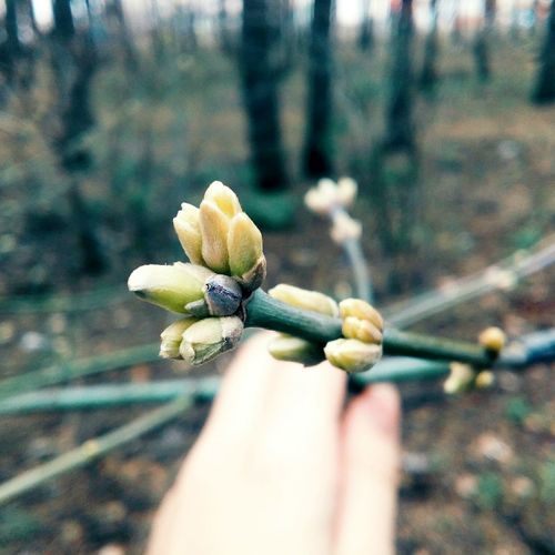 Spring is coming Spring New Life Trees Green Past Remember First Eyeem Photo