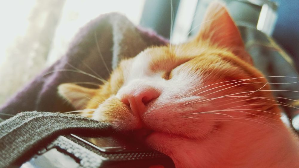 Domestic Animals Pets Eyes Closed  One Animal Animal Themes Relaxation Close-up Domestic Cat Sleeping Yawning