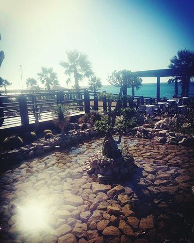 Beautiful Nature Sunnyday Palms & Beach Wind Sea Bonzai Bridge Over Water Rocks In Water Restaurant Decor Restaurant View Aegean Sea Rhodes ısland Greece