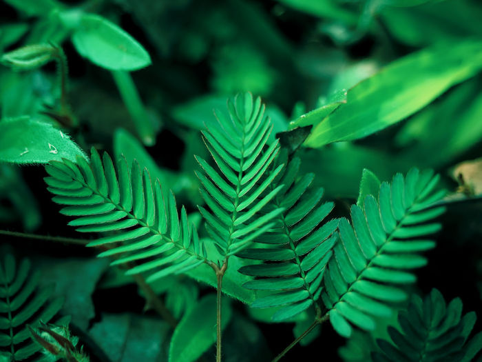 Green Color Leaf Plant Part Plant Growth Close-up Nature Beauty In Nature No People Day Selective Focus Focus On Foreground Outdoors Fern Tranquility Freshness High Angle View Tree Natural Pattern Green Leaves