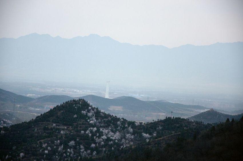 Cheenese ! Olympic Torch Landscape Sakura