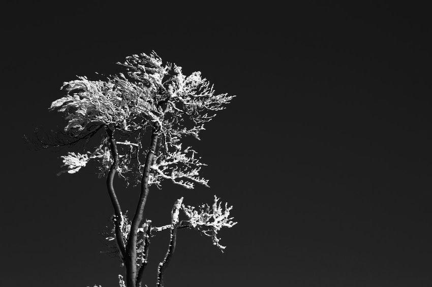 Black Background Nature Night No People Outdoors Studio Shot Winter