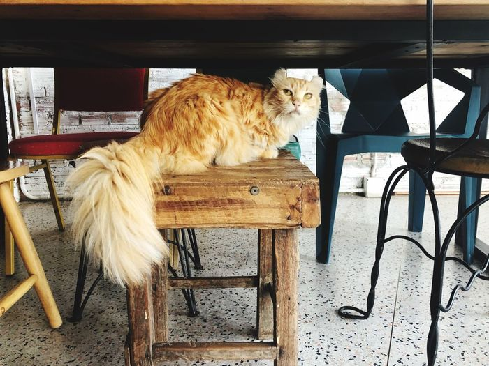 Breed Cat Cafe