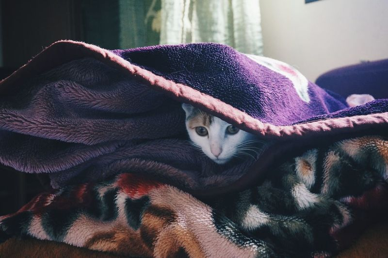 Close-up of cat wrapped in blanket