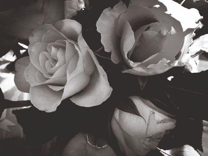 Lavieenrose Bouquet Rose♥ Rose🌹 Quimper Bretagne