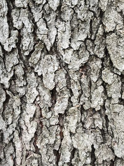 Backgrounds Bark Brown Close-up Cracked Detail Natural Pattern Nature Pattern Rough Textured  Tree