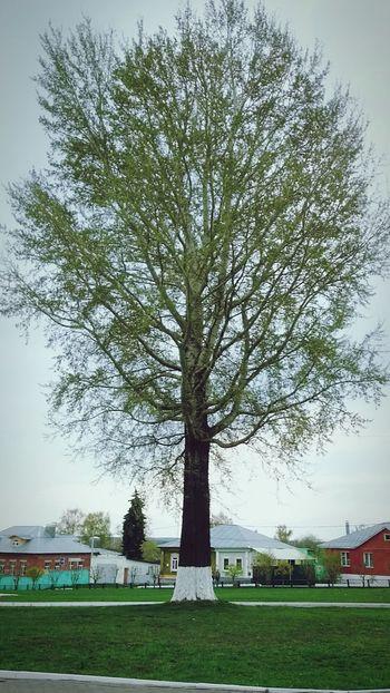 Hello World Taking Photos Eyemphotography Kolomna Tree And Sky Green Spring Awaking To Life 1may привет мир 1мая Коломна дерево небо⛅️ Весна💐🌷🌿 весна просыпаются к жизни