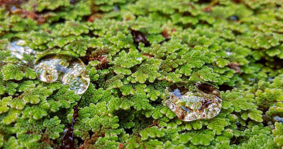 Dew Drops Dewdrops Dew Dewdrops_Beauty Morning Dew Eyeem Plants