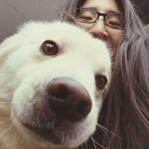 ohhh so cute???? Temple's dog? Lovedog Dog Love Dog Labrador Retriever