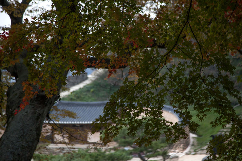 autumn at Gochang Eupseong in Jeonbuk, South Korea Fall Beauty Tranquility Architecture Autumn Autumn Color Beauty In Nature Branch Day Fall Gochang Growth Nature No People Outdoors Scenics Sky Tree Water