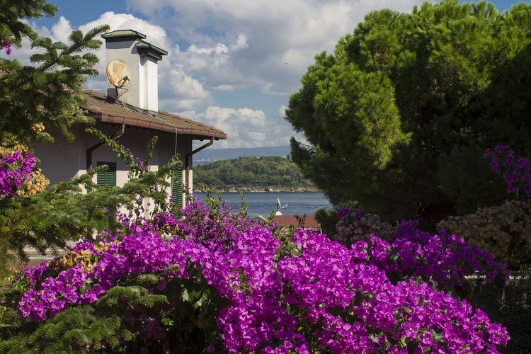 Purple flowering plants in park against sky