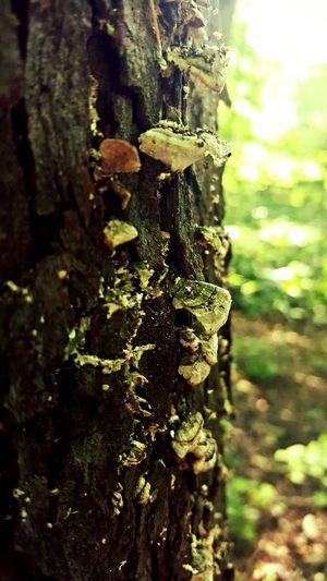 Tree fungus.