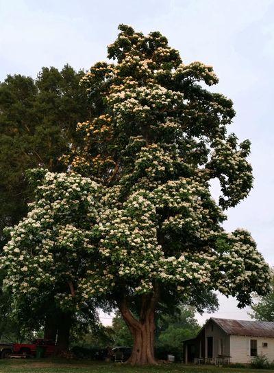 A beatiful tree