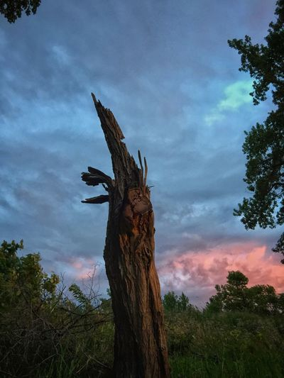 Clouds Scenery Tree Cloud - Sky Plant Sky Tree Trunk Trunk Low Angle View Nature Growth Outdoors Beauty In Nature Sunset Scenics - Nature Non-urban Scene Day Tranquility