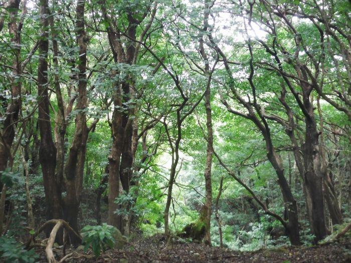 Tree Ogasawara Forest Tokyo Hahajima Island Nature Beauty In Nature Beatiful Growth Tranquility No People