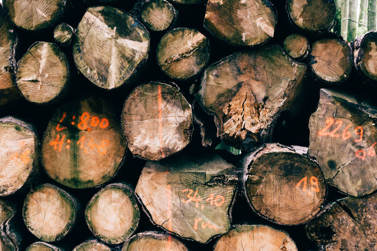 Stack of beech wood prepared for timber.
