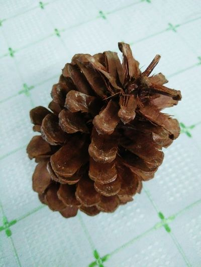 High Angle View Indoors  Nature Close-up Beauty In Nature Flower Flower Head Pine Cone Close Up Pine Cones Bronze Colour Beautiful