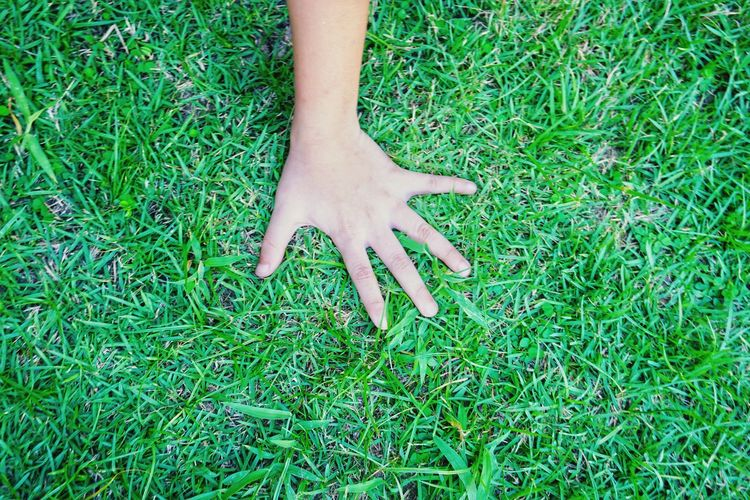 Hand touching the grass Nature Natural Plant Green Grass Touching Finger Playing Blackandwhite Soil Greenery Arm Boy Skin Field Lawn Five Nail Dirty Human Hand Low Section Child Childhood High Angle View Grass Close-up Green Color Plant Life Growing Young Plant