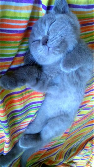 Catsofinstagram Photography Cat Relaxing Lovely Sleeping Sleeping Cat Photooftheday Photo Love Photolove Cat Lovers Pets