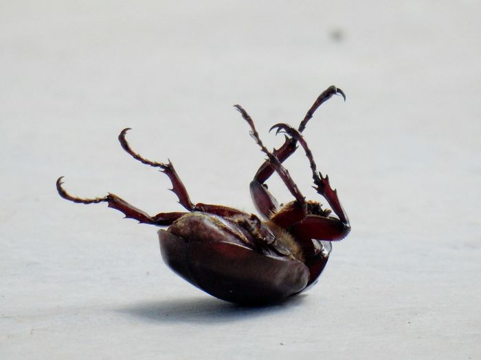 Close-up of dead insect on floor