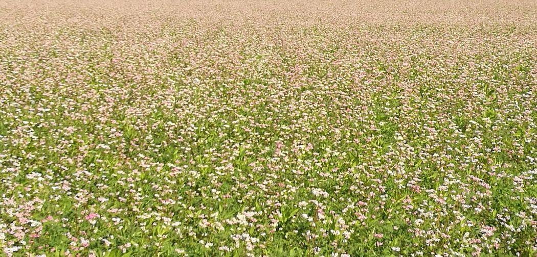 View of flowering plants growing on field