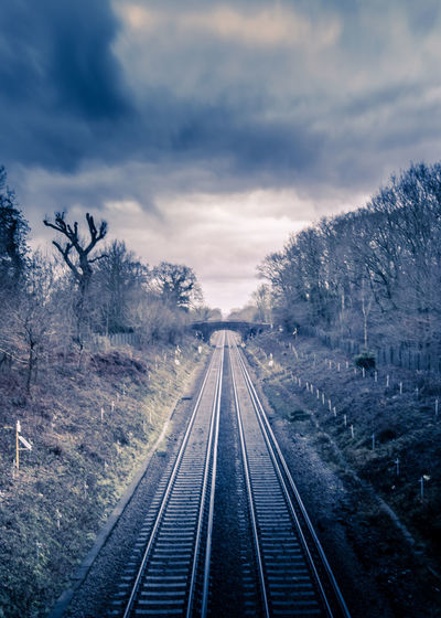 Railroad tracks along plants and trees against sky