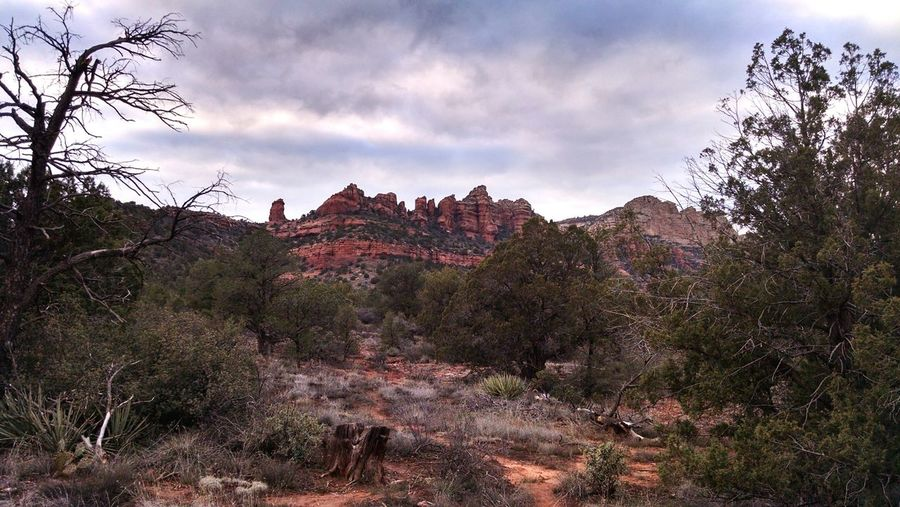 Tree Nature Landscape Forest Red Sunset Mountain Sky Cloud - Sky Plant Beauty In Nature No People Outdoors Sedona Arizona Boynton Canyon Perspectives On Nature
