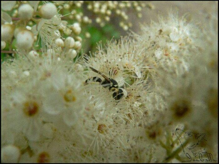весна цветы цветение белый сказка оса насекомое White Spring Flowers