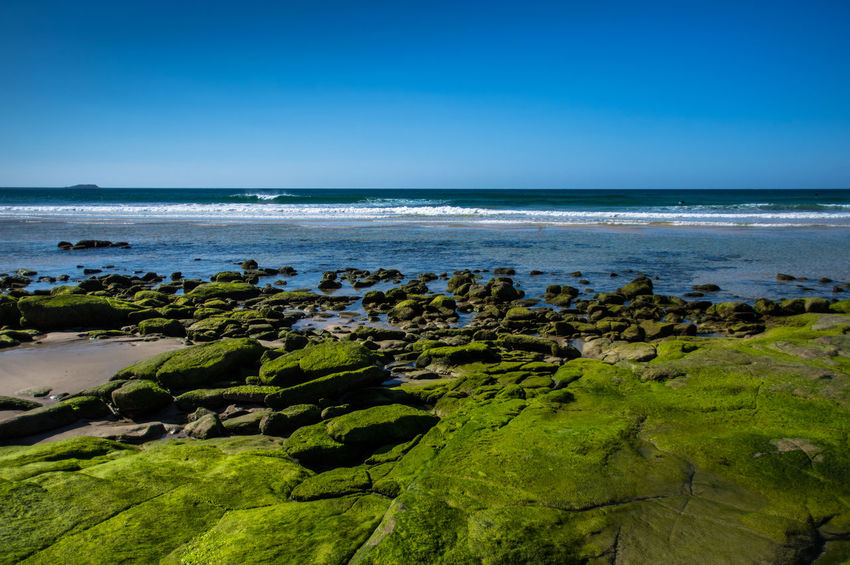 green & blue Australia Beach Beauty In Nature Blue Clear Sky Day First Eyeem Photo Green Color Horizon Over Water Kingscliff Landscape Nature Outdoors Scenics Sea Sky Travel Destinations Water