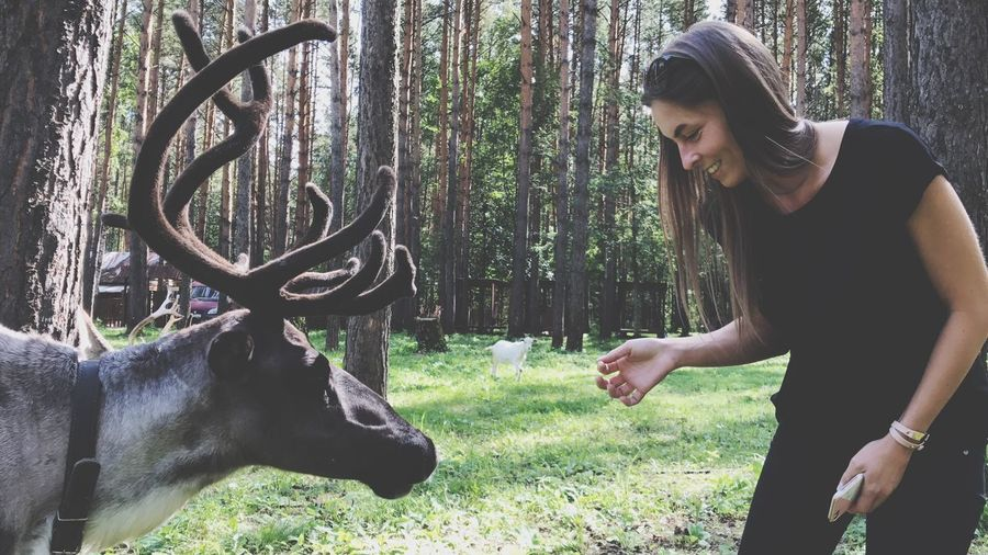 Woman Standing By Reindeer In Forest