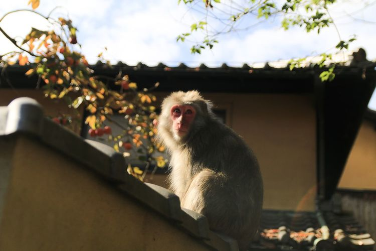 Monkey sitting on a looking away