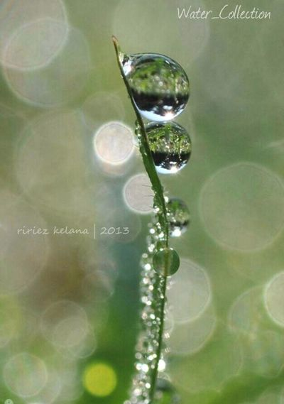 Water_Collection picture of the day by @ririezkelana ! Water_collection Macro_collection EyeEm Best Shots EyeEm Indonesia