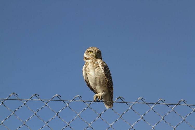 Bird perching on fence against clear sky