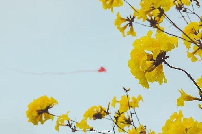风铃林 Flowers Yellow Landscape Joy Sunny Maoming Fly