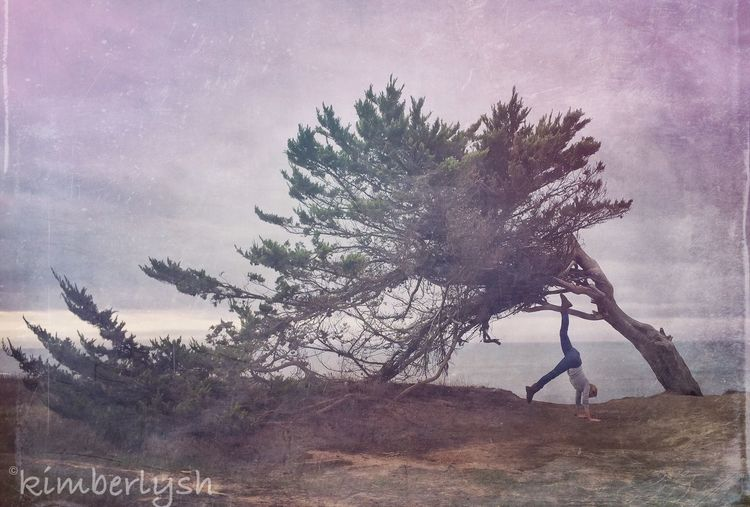 My fav tree in Half Moon Bay! IPS2015Trees Tree Yoga Lonetree HalfMoonBay California
